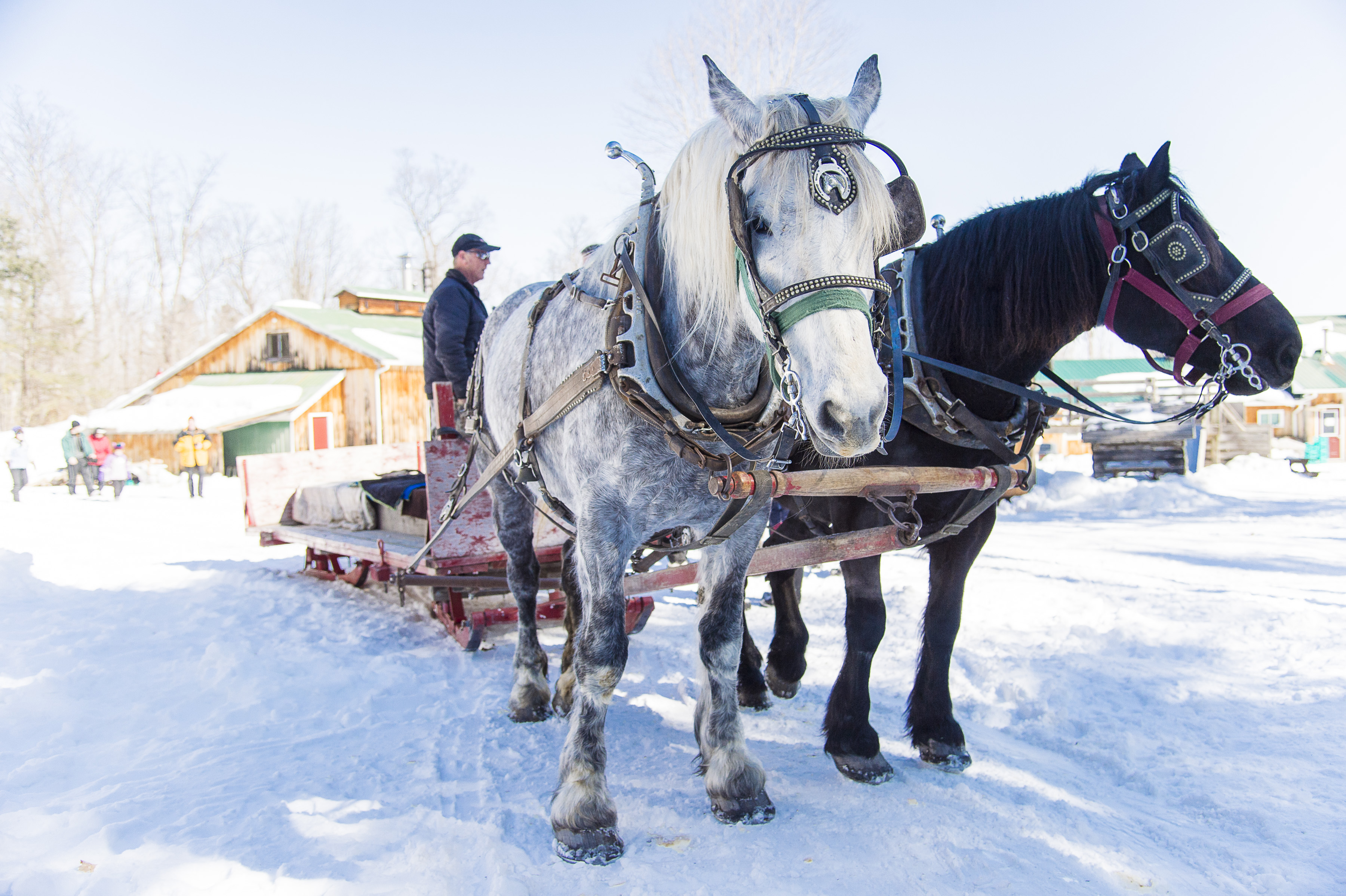 ATTRACTION _ FULTONS _ MAPLE EXPERIENCES _ OHTO PHOTOSHOOT _ MAPLE HORSE SLEIGH RIDE _ WINTER _ CREDIT TO TREVOR%2