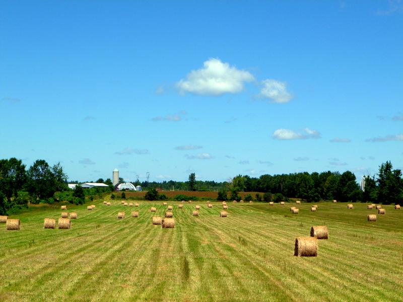 FARMING & AGRICULTURE _ BARN FIELD HAY BAILS _ SUMMER _ LAURA PORTER _ VERBAL PERMISSION _ 2011