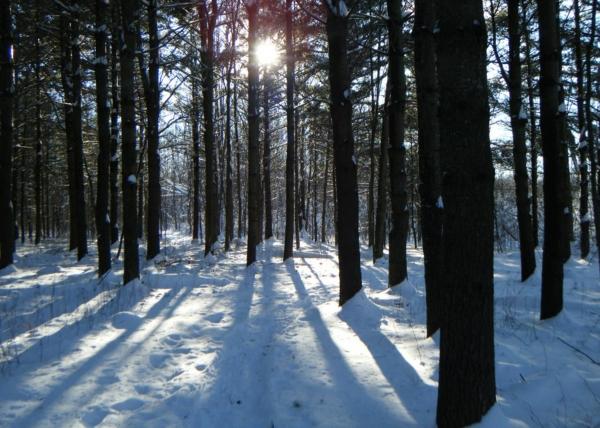 perth-wildlife-reserve-drummond-north-elmsley_edited