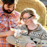 milkhouse sheep wool farm montague cheese